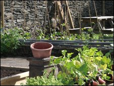 The allotment garden at The Eagles, Corwen