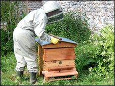 Beekeeper lifts the hive's lid