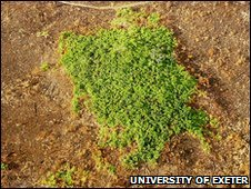 Degraded forest island (image: University of Exeter)