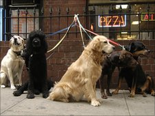 Dogs on short leads