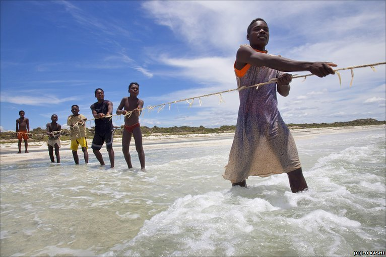 Bbc news in pictures madagascar 39 s troubled environment for African rope fish