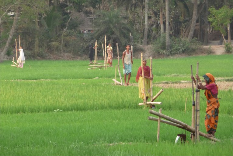 Farming subsistence rice growing in india
