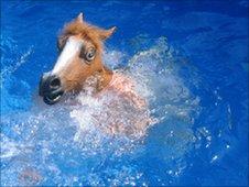 'Horse boy'