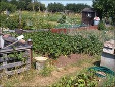 Newnham Avenue Allotments in Bedford.