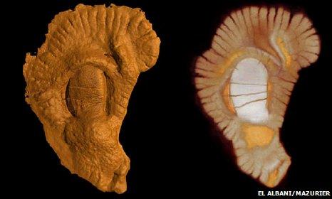 Fossil (©El Albani - Mazurier)