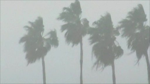 Winds batter palm trees