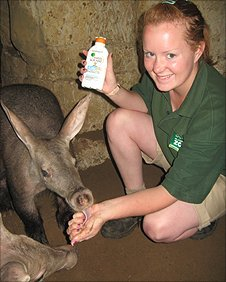 Lauren Ogden applies the sun cream to an aardvark