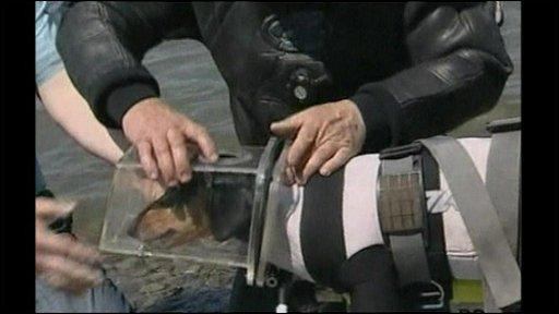 Scuba-diving dog