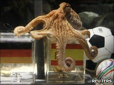 "Paul, the so-called ""octopus oracle"" predicts Spain's victory in their 2010 World Cup semi-final."