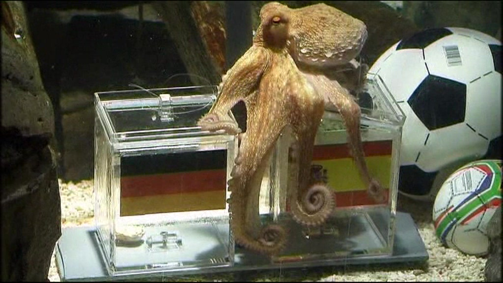 Paul the octopus chooses Spain