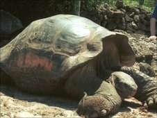 A giant tortoise on the Galapagos Islands