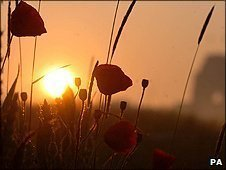 The Sun rises over poppies near the Thiepval Memorial Monument in Northern France