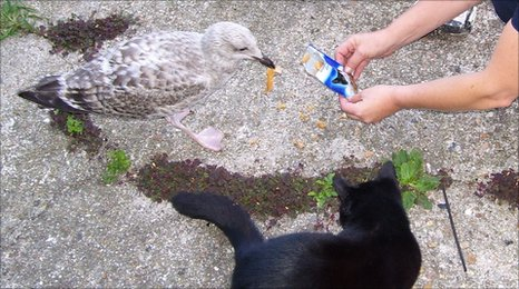 Pooh,a seagull, with a cat.