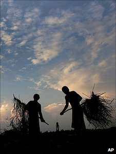 Indian farmers working in a field (Image: AP)
