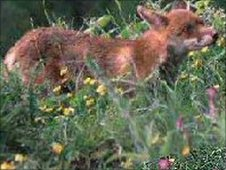 Generic wildlife scene
