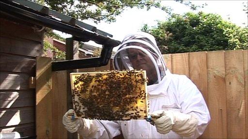 City beekeeper Tim Payne