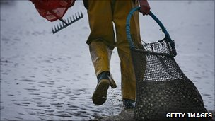 Cockle picker in Morecambe Bay