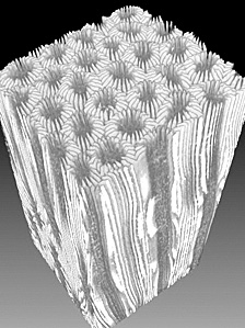 CT scan of the coral core sample (Image: Science/AAAS)