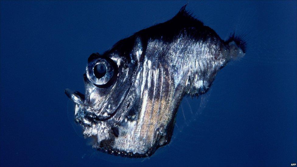 Bizarre marine creatur...