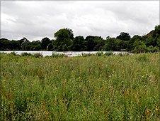 Rare marsh at Hatfield Forest