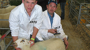 Enoc Jenkins (right) and his son from Talybont, Ceredigion, preparing their Welsh Mountain sheep for judging