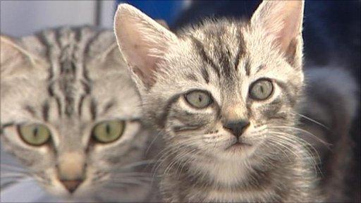 Wood Green Animal Shelter abandoned kittens