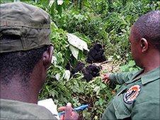 Rangers recording details of a gorilla (Image: Gorilla.cd)
