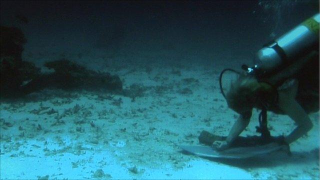 Caroline Appleyard painting underwater