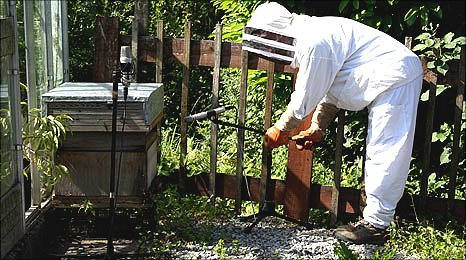 image shows one person in beekeepers suit recording the sound of the bees