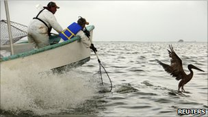 Rescue team in Louisiana attempting to capture a brown pelican