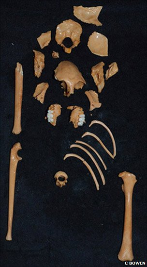 Fossilised remains of Antillothrix bernensis, an extinct monkey discovered in a cave in the Dominican Republic (Image: C Bowen)
