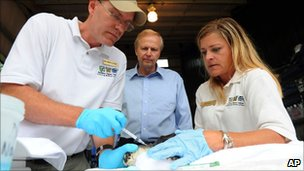 Bob Dudley observes a sea turtle receiving treatment