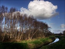 Ham Wall nature reserve by Roger Fry