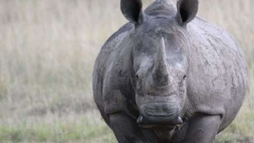 Fears for the safety of South African Rhinos