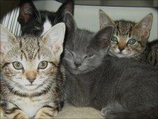 Kittens at the Cambridge Blue Cross shelter