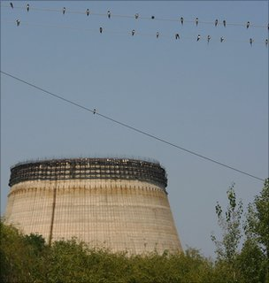 Swallows in Chernobyl (Image: Tim Mousseau)