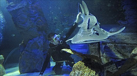 Martin and Betty the bowmouth shark