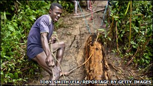 Malagasy workers drag felled timber through the forest