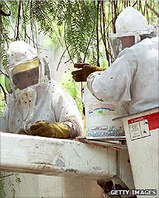 Trying to remove a Killer Bee hive in Mexico City, 1995