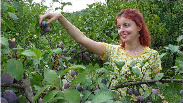 Operetta singer Amelia Antoniu picking plums in orchard