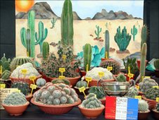 David Ennals' award winning cacti