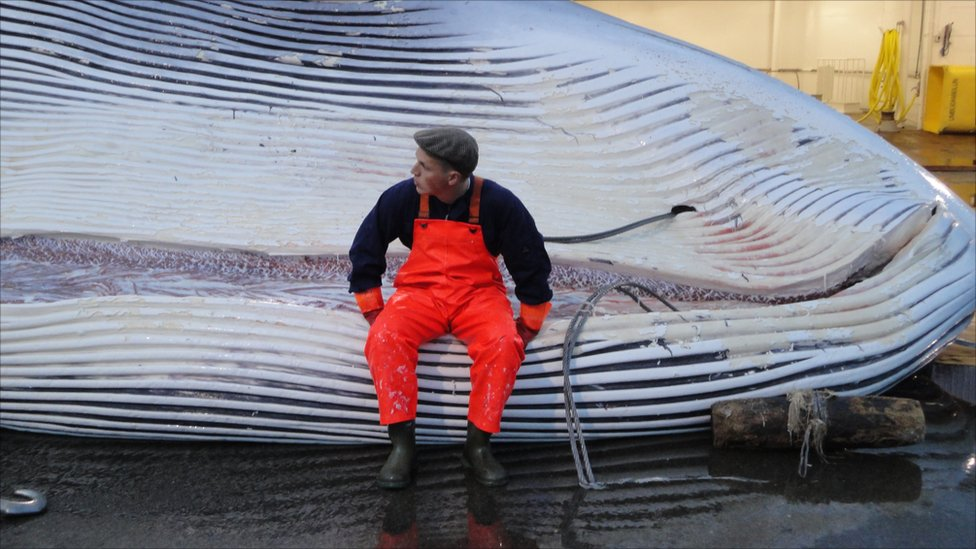 banning whaling Should whaling activities be banned completely whales are the largest animals on earth it has existed for over millions of years they.