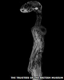 X-ray of Egyptian cat mummy