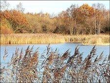 Potteric Carr nature reserve, Doncaster