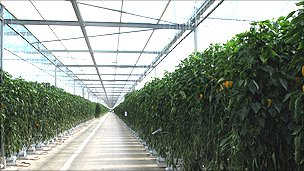 Inside Tangmere Airfield glasshouse