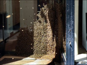 Bees on the door of an art gallery