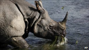 A one horn rhino in Nepal&#039;s Chitwan National Park on 1 August 2010