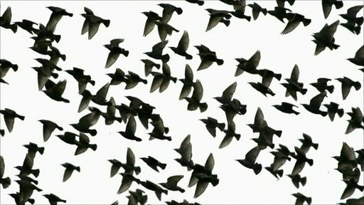 A flock of birds flying together
