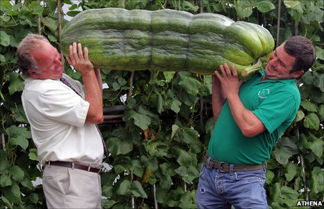 Phillip Vowles and son Andrew with the huge marrow