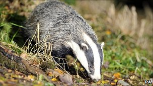 A badger (Image: PA)
